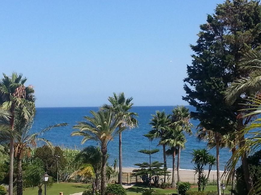 Estepona (Málaga). Palmeras. Vista desde mi ventana. Año 2010