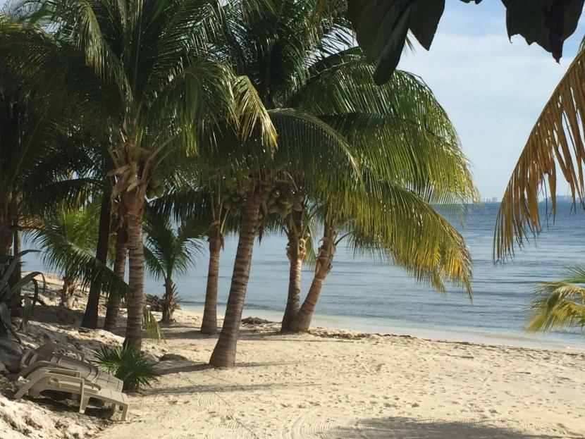 Palmeras en Cancún. Isla Mujeres. Abril 2016